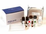 ACCEL ELISA COVID_19 Saliva Antigen Kit