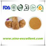 Competitive price Hericium Erinaceus Powder