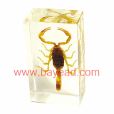 man made insect amber Paperweights,office gift,insect Specimens,bug Specimens