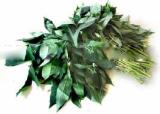 Fresh tapioca leaf