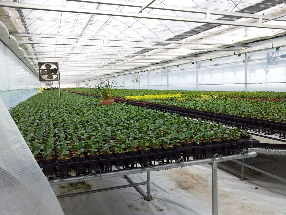 Greenhouse Gutter Connected Greenhouse Commercial