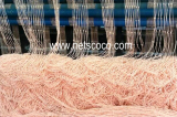Netscoco Laver Cultivation Net Seaweed Farm Net Nori Cultivation Net