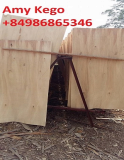 Eucalyptus Core Veneer Thickness 2_0mm A Grade to Make Plywo