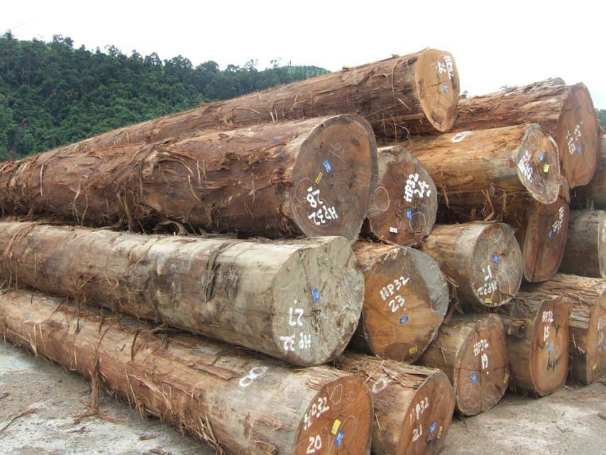Mahogany tali doussie round logs for sale from roadstar