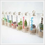 Promotional Gift,Live Plant Key Chain, Mini Plant Key Holder
