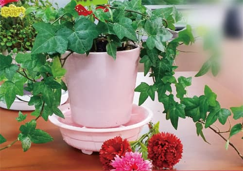 Self_Watering Saucer for easy home gardening