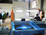 factory image 7.jpg