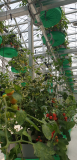 smart farm_ innovative agricultural controllable system_ cultivation tray moving greenhouse