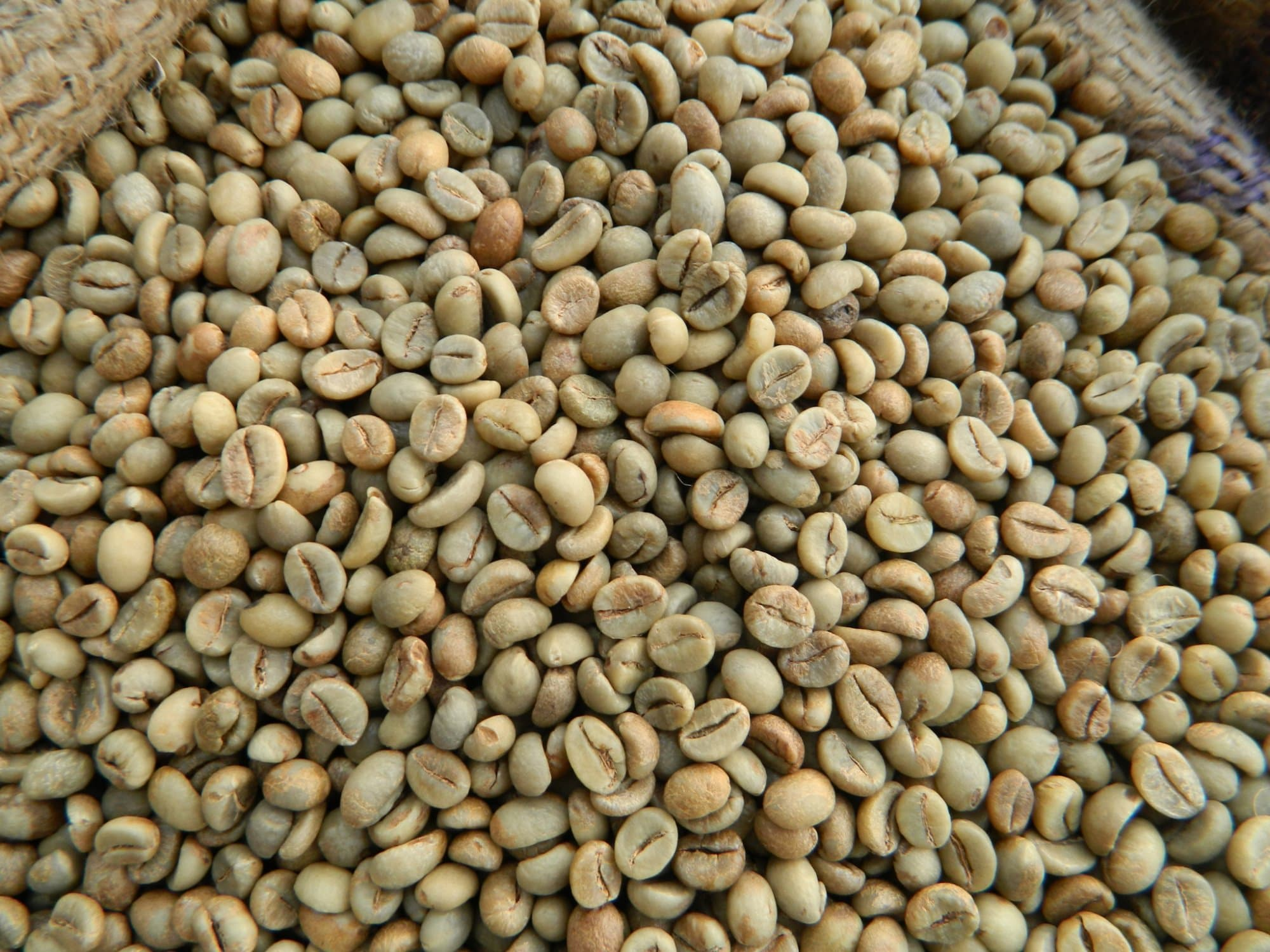Green Coffee Beans_ Vietnam Robusta Coffee Grade A