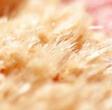 closeup-5 (2).jpg