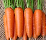 Carrot seeds Keikou