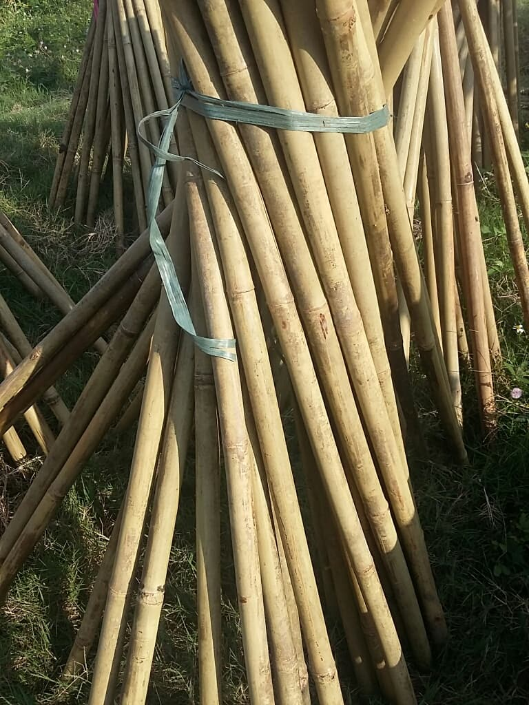 High quality bamboo poles from viet nam jn
