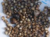 shellfishery