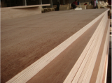 with best price commercial plywood