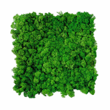 WALL PANELS -Moss green 54-