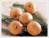 Korean Singo Pear