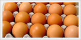 Fresh Brown Eggs in Bulk(Food Material)