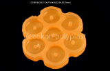 PVC Rubber Moulds Cover Blocks _ Spacers