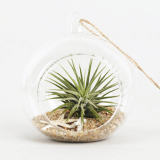Air Plants Tillandsia DIY Terrarium Kit _ Ionantha Mini Beach _ by Joinflower Joinfolia