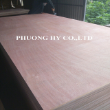 Sell_ Bintangor plywood 4x8 glue MR from Vietnam