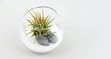 Tillandsia Air Plants Terrarium Kit DIY Set with Ionantha Inspiration by White sand beach