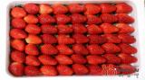 Fresh Strawberries 1kg KOREA - MISO-N