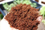 High quality coco peat -powder-