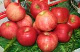 Fresh Fruit - Apple