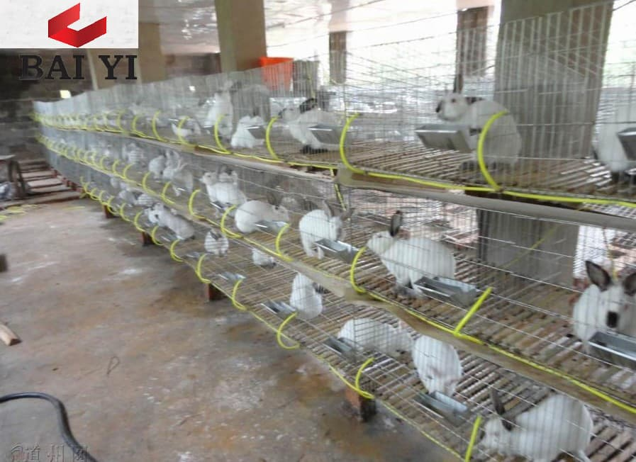 Equipment Trader Online >> Wire Mesh Rabbit Cages for Rabbit Farm from Anping County Baiyi Metal Wire Mesh Products Co ...