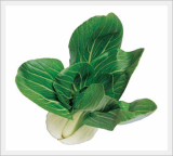 Pakchoi Seeds