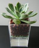 Small Vase for Mini-plant ; Succulent
