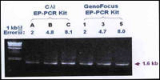 PCR Premix kit