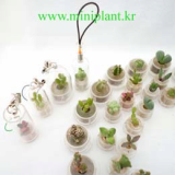 Live Plant Key chain, mini plant, pet plant, pettree, babytree, plant with key holder