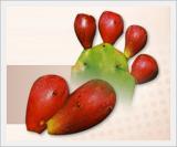 Jeju Cactus