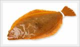 Halibut(Flatfish) Cultured in Jeju