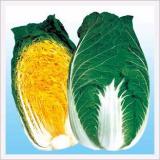 Chinese Cabbage, Jeil Chamjin Norang