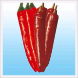 Hot Pepper, PR Filial Daughter