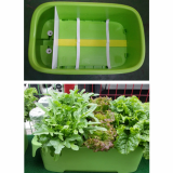 Vegetable garden box