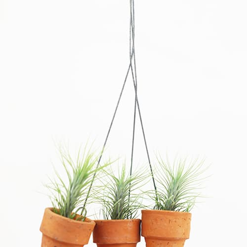 Triple mini terracotta pot tillandsia funckiana set | tradekorea