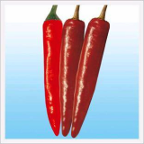 Hot Pepper, Big Lucky