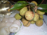 Canned Litchi