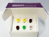 Coronavirus_ COVID_19 RT_LAMP Detection Kit