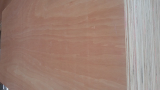 1220x2440 fac_back red color Plywood