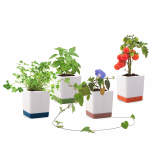Two tone square pot all in one grow kit by Joinflower Joinfolia_