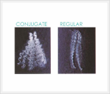 Polyester Staple Fiber Conjugate