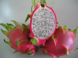 Supplier Dragon Fruit High Quality