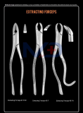 Dental Extracting Forceps