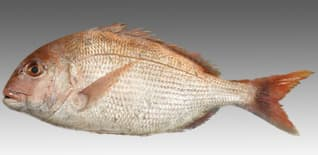 Bamboo Salted Red Sea-Bream