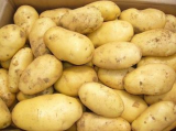 FRESH HOLLAND POTATOES AND RED AND YELLOW ONION BEST LOW PRICE