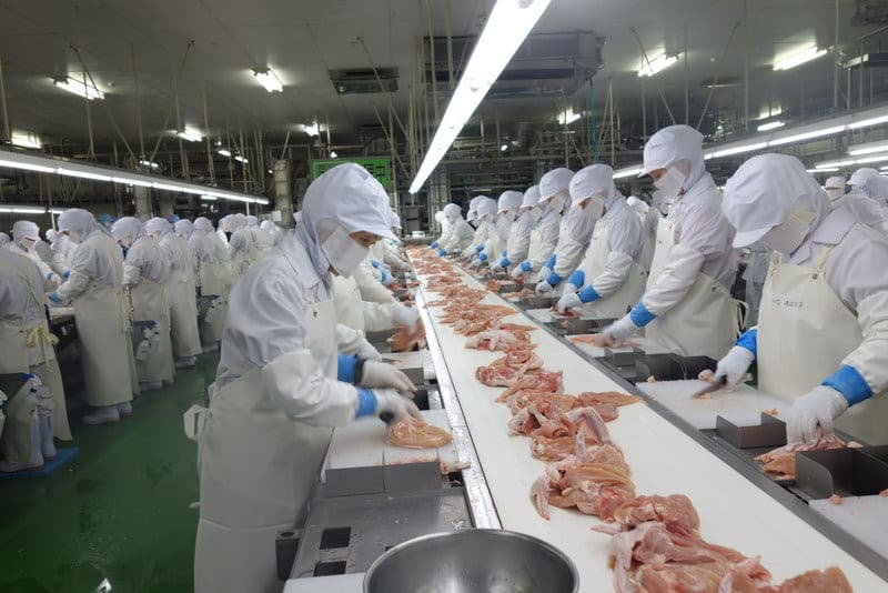 Brazil Halal Frozen Whole Chicken and Parts !! Top Supplier